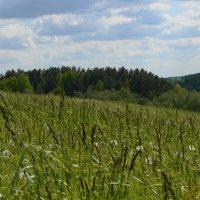 На дальней станции саиду, трава по пояс .... :: евген03 Левкович