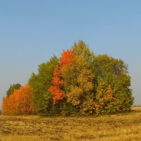 Просто осень. :: nadyasilyuk Вознюк
