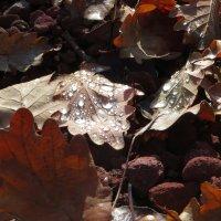 Капельки росы, как чистые алмазы :: Наталья (D.Nat@lia) Джикидзе (Берёзина)