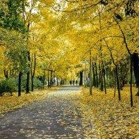 По аллее крещатого парка :: Сергей Тарабара