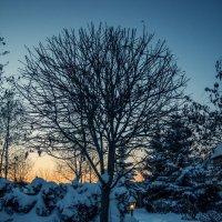 Зимнее настроение :: Nataliya Belova
