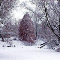 На замерзшей реке.. :: марк