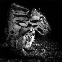 Хищник. :: Александр Назаров