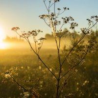 Солнце встает :: Федор Пшеничный