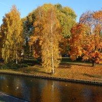 Золотая Осень в Риге :: Svetlana (Lucia) ***
