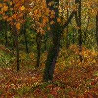 Золотая осень Nr.2 :: Людвикас Масюлис