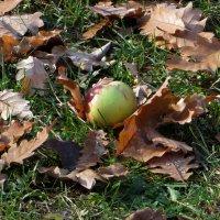 Яблоки на листья :: Наталья (D.Nat@lia)