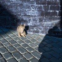 Серая кошка на сером фоне. :: Ирина Токарева