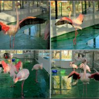 Фламинго. Жизнь за стеклом :: Нина Бутко