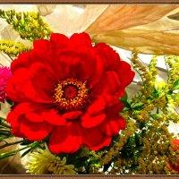 Красный цветок :: Наталья