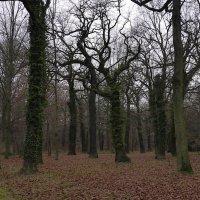 Осенний лес :: Николай Рогаткин