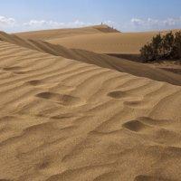 в песках затерявшись :: liudmila drake