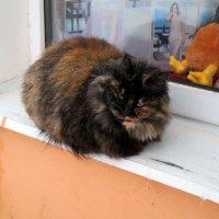 На первом этаже окно, там кот сидит уже давно.. :: Андрей Заломленков