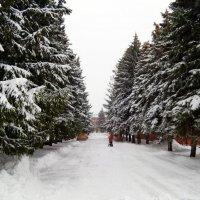 А снег идёт, а снег идёт.. :: Андрей Заломленков