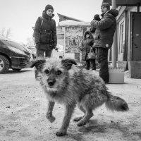 Бродяга :: Алена Демченко