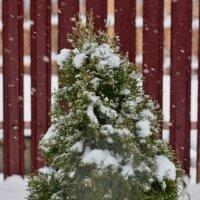 Встречает снежок :: Николай Масляев