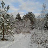Краски зимнего леса :: Николай Масляев