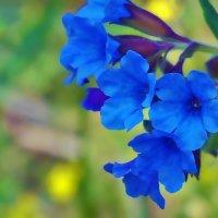 Медуница цветет :: Екатерина Торганская