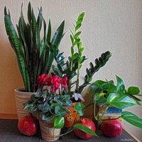 Комнатные цветы и гранаты :: Nina Yudicheva
