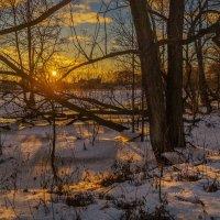 Солнце в ветках :: Андрей Дворников