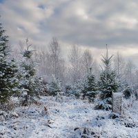 Я так люблю, когда приходит снег... :: Elena Wymann