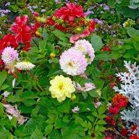 В саду :: Вера Щукина