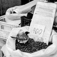 Птиц изучает почем нынче семки) :: Алена Демченко