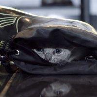 Кот в сапоге.. :: Лилия .