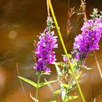 Цветы :: Мару Верведа