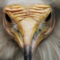 Взгляд орла :: Мару Верведа