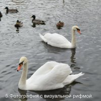 Белый лебедь на пруду :: Татьяна Помогалова