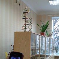 В кабинете биологии на видном месте макеты хромосом :: Алекс Аро Аро
