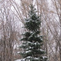 Снег на ёлке :: Дмитрий Никитин