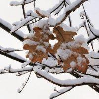 Вместе теплее зимовать :: Николай Масляев