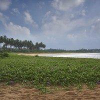 Негомбо-Вайккал. Цейлон. Negombo-Waikkal. Ceylon :: Юрий Воронов
