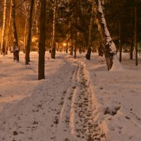 Лыжня и листопад :: cfysx