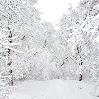 Зима на Кубани :: Евгений Замковой