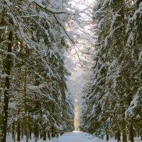 поздравляю с Зимой! :: Елена