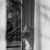 Солнечный кот :: Елена Зудова