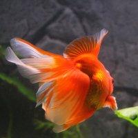 Живой цветок :: Dmitry Swanson