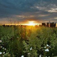 Рассвет июня :: sergej-smv