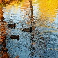 Плывущие в золотых отражениях... :: Sergey Gordoff