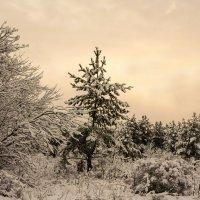 Зимняя тема 4 :: Игорь Александрович Оренбург