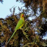 ...и зелёный попугай! :: Николай Волков