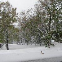 После снегопада. :: Вячеслав Медведев