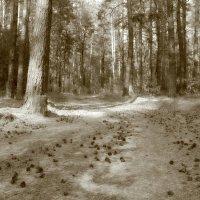шишкин лес :: оксана