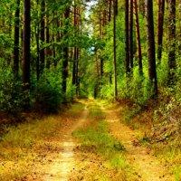 по лесным дорожкам :: оксана