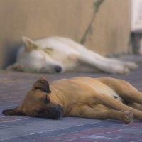 Спят усталые собаки :: Ефим Журбин