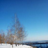 Морозный день :: Тамара Лисицына