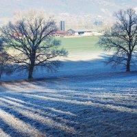 зимы штрих-код :: Elena Wymann
